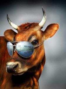 fte_Cow