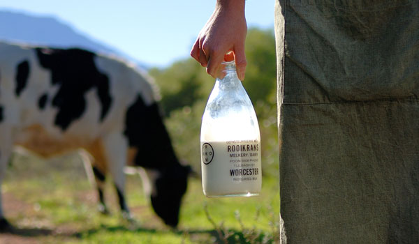 Cape Dairy Experience